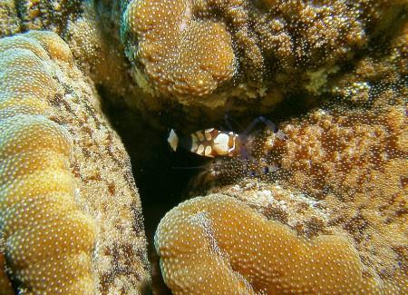 Blue Realm Diving (Blue Beach DC),Dahab,Sinai-Nord ab Dahab,Ägypten