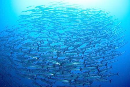 Dive Center Yap / Klaus Föhles,Mikronesien