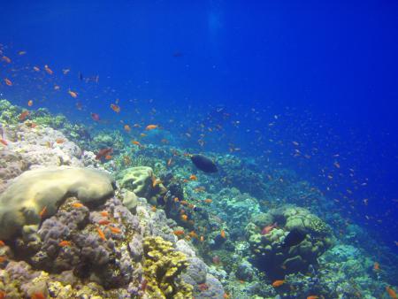 Beachsafari Diving Camp Marsa Alam,Aquarius Tauchcamp,Marsa Alam,Marsa Alam und südlich,Ägypten