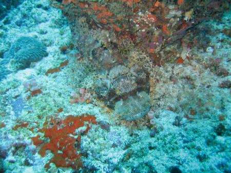 Velidhu,Eurodivers,Malediven