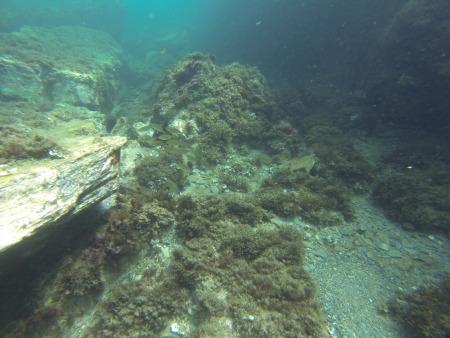 Cabo de Palos Diving,Cabo de Palos,Festland,Spanien