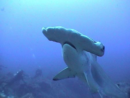 Layang Layang Dive Center,Pulau Layang Layang,Layang Layang,Malaysia