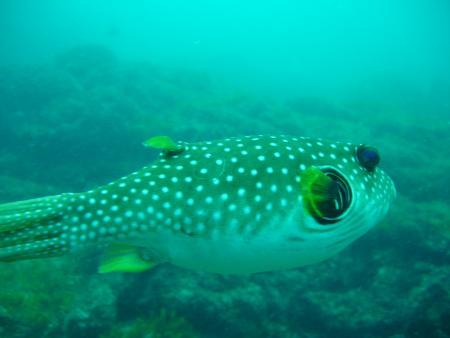Deep Blue Diving,Playa del Coco,Costa Rica