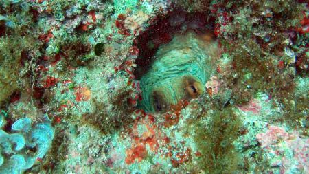 Nice Diving,Nizza,Frankreich