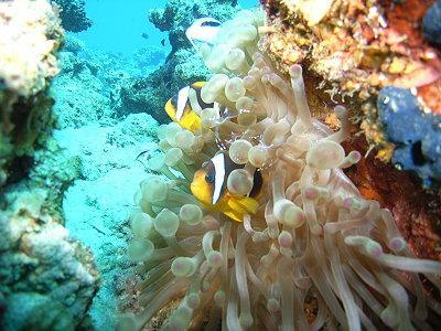 Orca Dive-Center Dahab - Coralia Club Dahab,Sinai-Nord ab Dahab,Ägypten