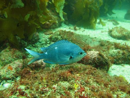 Dive Zone,Whitianga -Coromandel Peninsula,Neuseeland