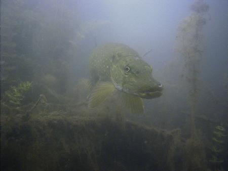 H2O-Divepoint,Niedernberg,Bayern,Deutschland