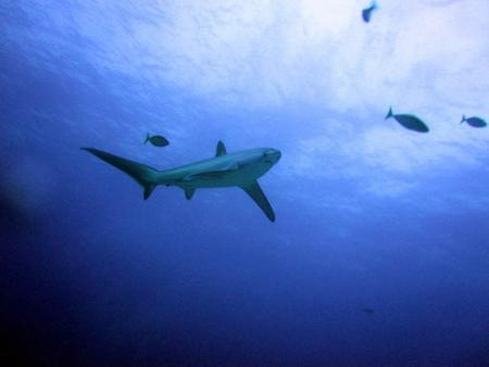 Tresher Shark Divers,Malapascua,Philippinen