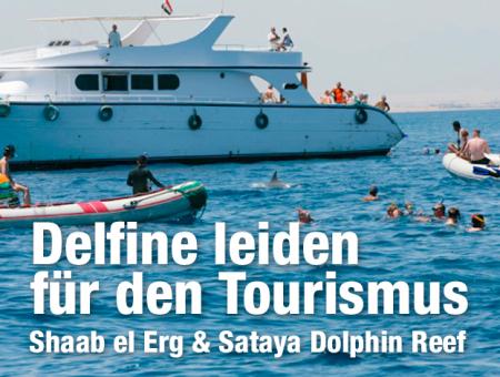 Shaab El Erg (Poseidon Reef,Dolphin House),Sataya Dolphin Reef,Ägypten