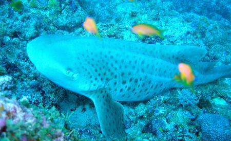 Vakarufahli,Ari-Atoll,Pro Divers,Malediven