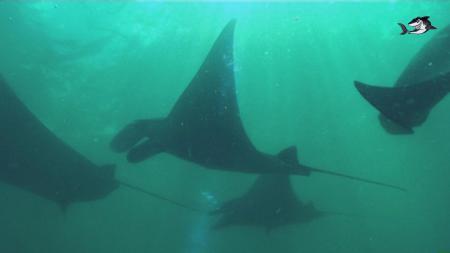 ORCA Diveclub Candidasa,Bali,Indonesien