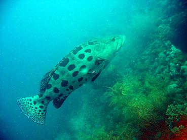 SS Yongala, S.S.Yongala (Yongala Wreck),Australien