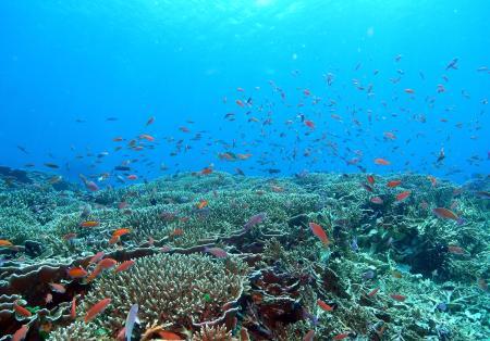 Alor Dive,Allgemein,Indonesien