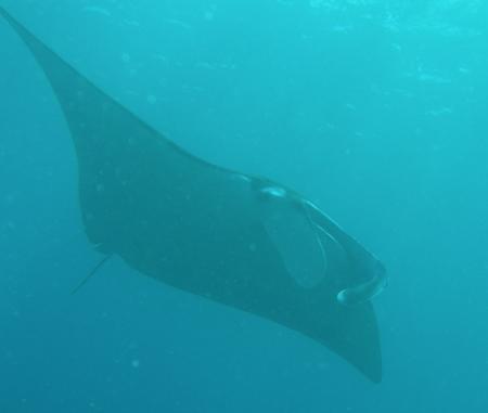 Gangga Divers Candidasa Bali,Bali,Indonesien