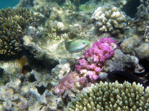 1-2 m unterwasser !, Soma Bay,Ägypten