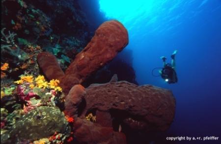 Südsulawesi - Tukangbesi-Atoll,Indonesien