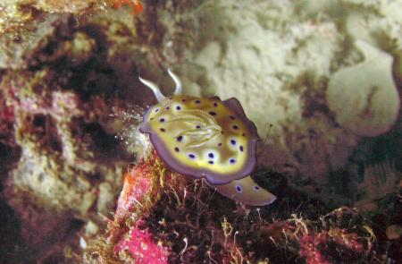 Sunken Island (Takot Reef),Romblon,Philippinen