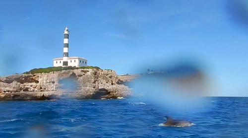 East Coast Divers Mallorca, Porto Colom - Delfine in Hafenausfahrt, East Coast Divers; tauchen auf Mallorca; Mallorca, East Coast Divers, Porto Colom, Mallorca, Spanien, Balearen
