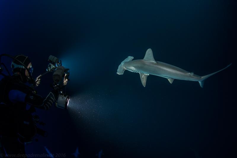 Mio und der Hammerhai