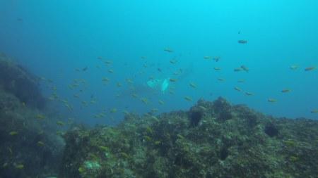 Tofoscuba,Tofo,Mosambik