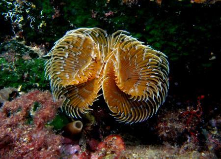 Poseidon Nemrod Club,Calella de Palafrugell,Festland,Spanien