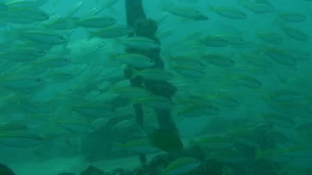 Pearl Andaman diving,Andamanensee,Thailand