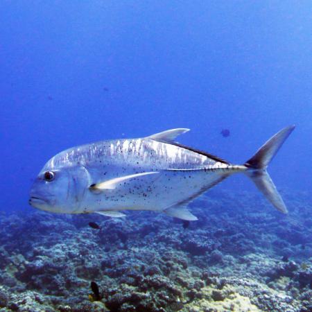 Lahaina Divers,Maui,Hawaii,USA