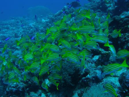 Palau: Koror & Peleliu,Palau