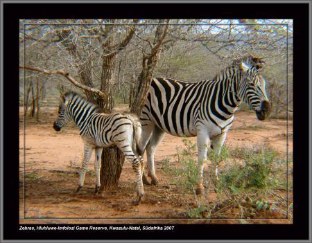 Mpila Camp,Hluhluwe,Südafrika