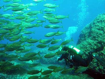 East Coast Divers, Porto Colom, Mallorca, Spanien, Balearen