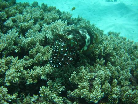 ProDive,Cairns,Australien