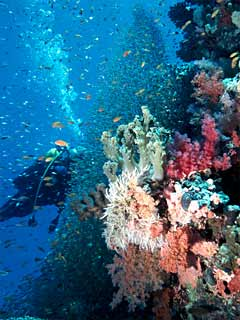 Hor Palace Diving Center,Hor Palace Hotel,Hurghada,Ägypten