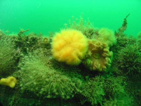 Alpha Diving,Dänemark