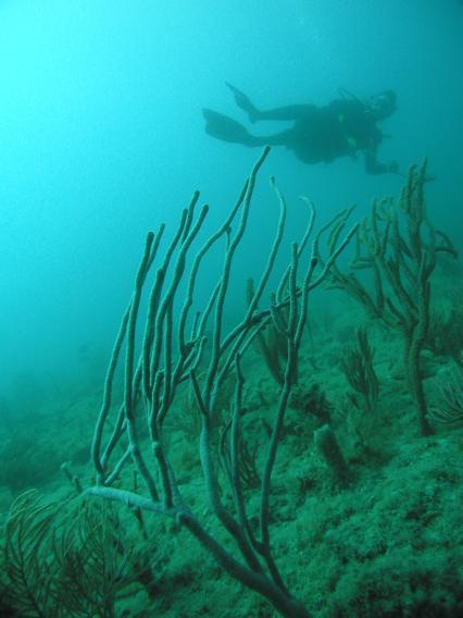 Narcosis Dive Charters,Riviera Beach,Florida,USA