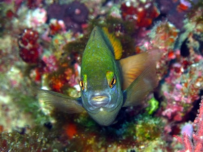 Malediven Fotos meiner Tauchsafari auf MY Galileo Dez 2010/Jan2011, Male Atoll,Ari Atoll,Rashdo Atoll,Malediven