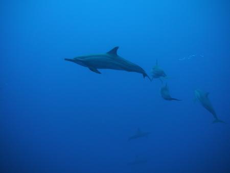 Euro-Divers,Kandooma,Holiday Inn,Malediven