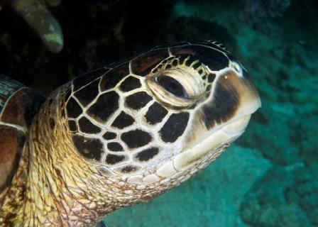 oceans4you Diving Center,Panglao,Bohol,Philippinen