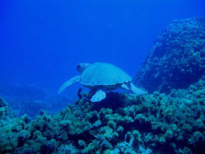 Phoenix Dive Club, Kreta, Griechenland