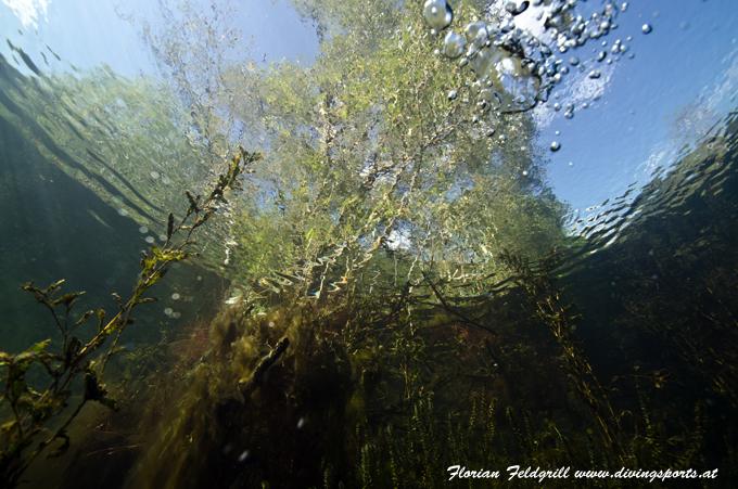 Freshwater, Süsswasser Steiermark,Österreich