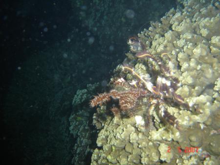 Tresher Shark Divers,Malapascua,Bavaria Blue Diving,Hurghada,Philippinen,Ägypten