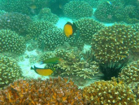 Maku Dive Center,Emirat Fujairah,Vereinigte Arabische Emirate