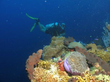 Prince John Dive Resort,Marantale/Parigi,Indonesien