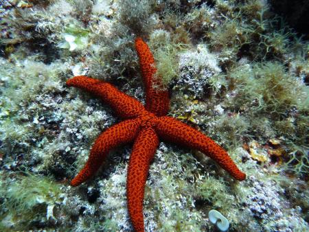 S´Algar Diving,S´Algar,Menorca,Balearen,Spanien