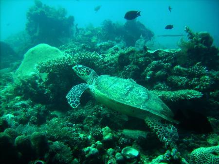 White Sand Divers,Amed und Tulamben,Bali,Indonesien