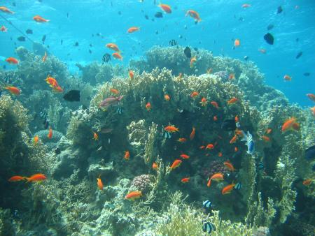 NEMO Dive Center,Jordanien