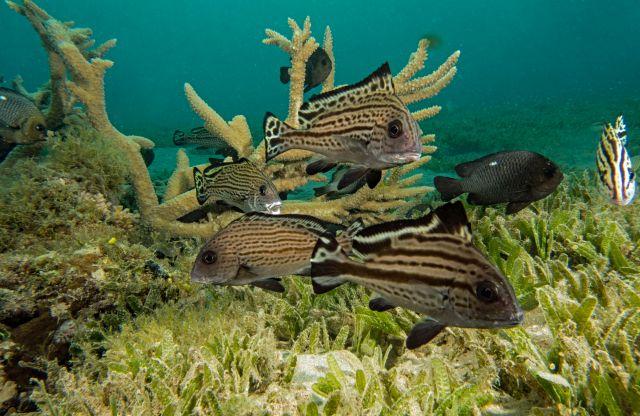 Artenvielfalt am hausriff, Tauchen, Sahl Hasheesh, Fisch, Ägypten