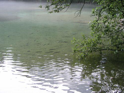 Badersee, Badersee,Bayern,Deutschland