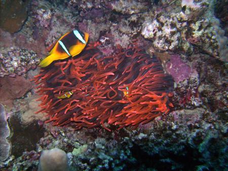 diving.DE Carnelia,Southern Leyte Divers,San Roque,El Quseir bis Port Ghalib,Philippinen,Ägypten