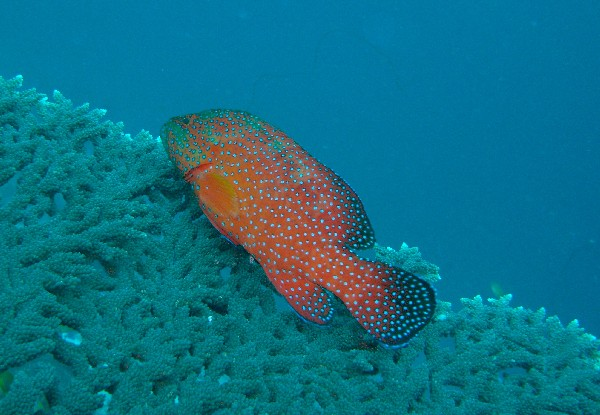 Raa-Atoll, Raa-Atoll,Malediven