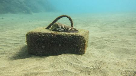 Island Watersports,Lanzarote,Puerto del Carmen,Kanarische Inseln,Spanien